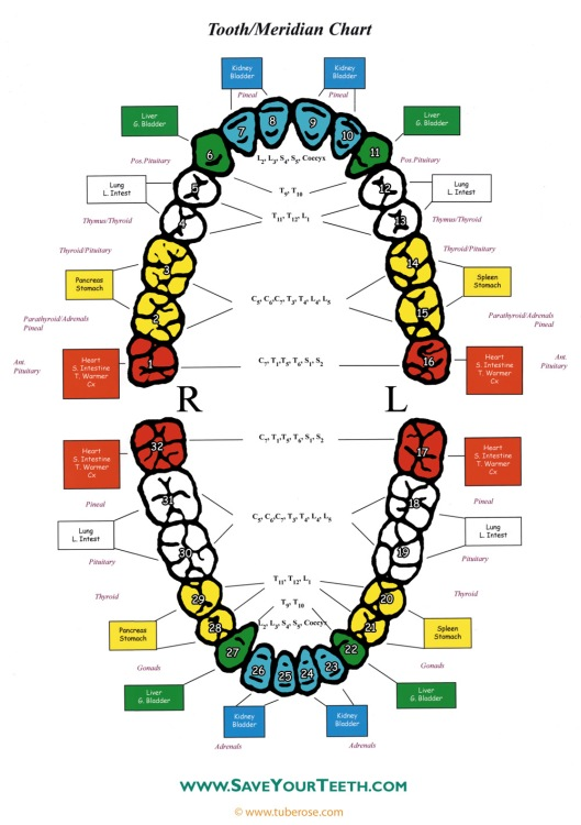 Chart developed by Bobby & Kerrie Broe via behmnaturaldentistry.com